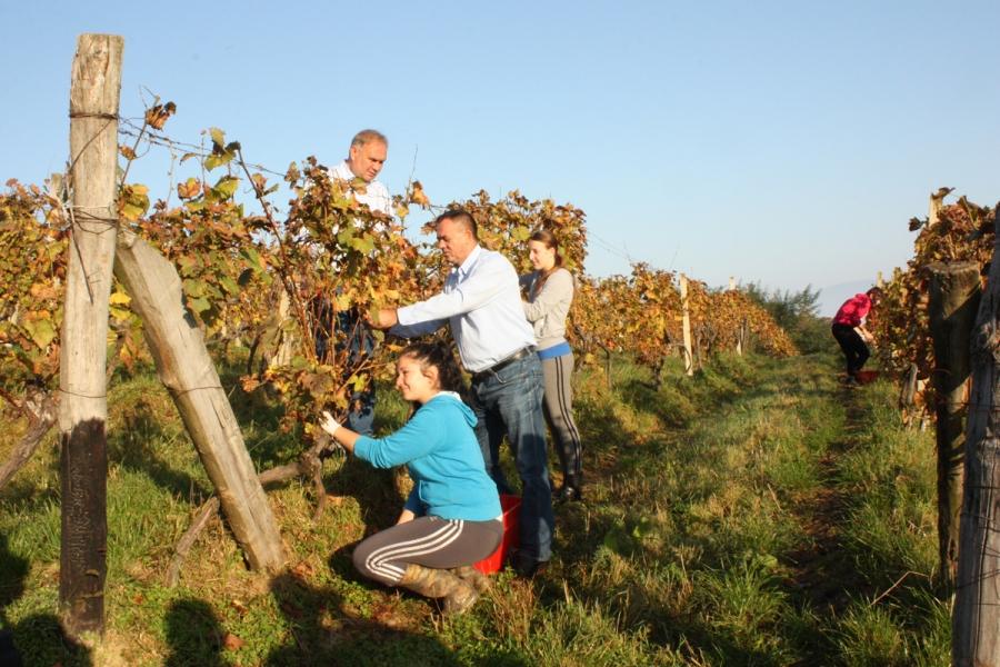 Župan u berbi grožđa sa učenicima Poljoprivredno-prehrambene škole